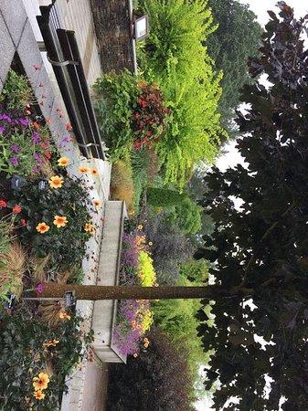 Great Torrington, UK: hot garden (even in the rain!)