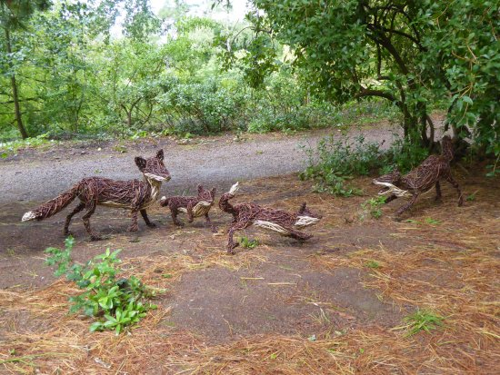 Tiverton, UK: Foxes at play