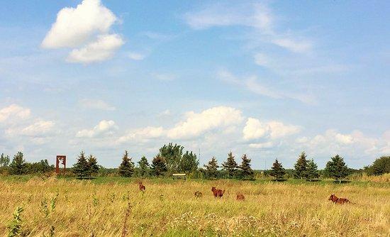 Bloomfield, Canadá: Ken Hall - The Hunt