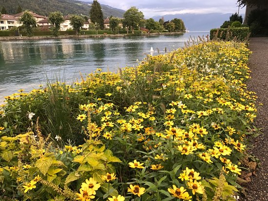 Thun, Suiza: photo9.jpg