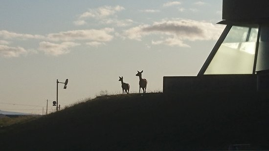Wakkanai, Japón: 温泉施設のすぐ傍に現れた野生の鹿