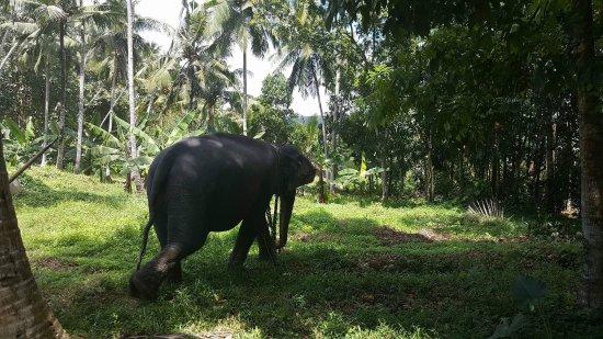 Kegalle, Sri Lanka: Very informative!