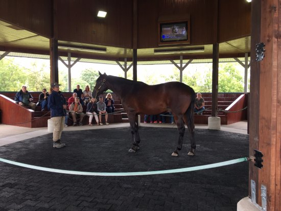 Hall of Champions: Horse - Western Dreamer - Picture of Kentucky
