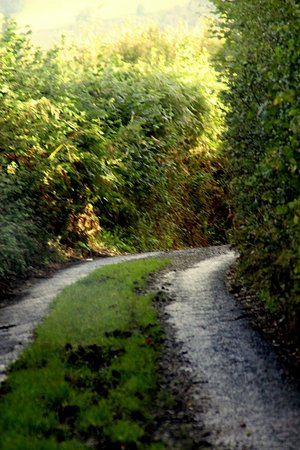 Widecombe in the Moor, UK: One of the devon lanes we used, glad we did not meet anyone!!