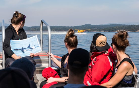 San Juan Islands, WA: The guide giving an overview of Orcas