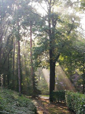 Garderen, Нидерланды: Morgen zon licht door de bomen in de tuin