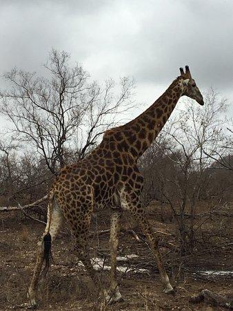 อุทยานแห่งชาติครูเกอร์, แอฟริกาใต้: photo0.jpg