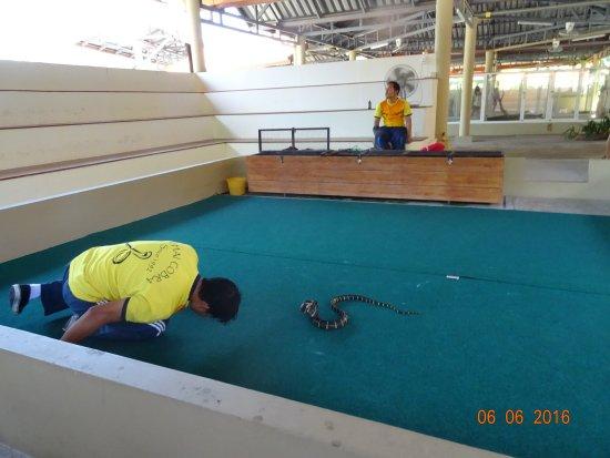 Phuket, Thailand: Змеиное Шоу на Пхукете