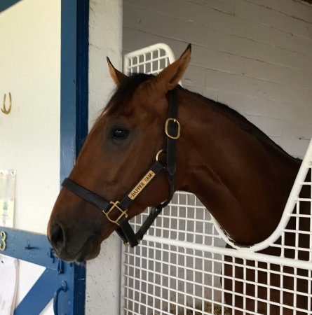 Thoroughbred Heritage Horse Farm Tours: After this tour you'll never look at horse racing the same. You'll almost be an expert!