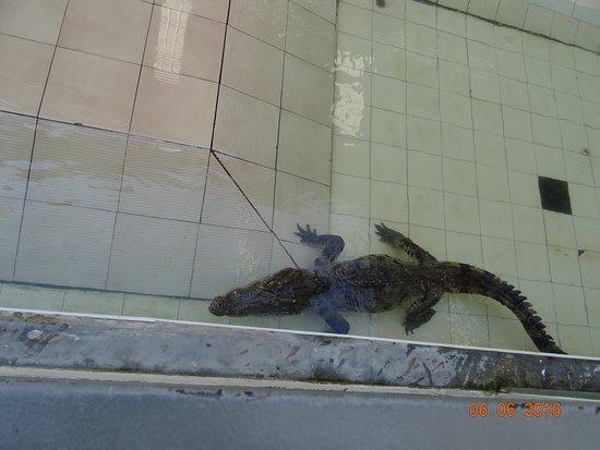 Crocodile Farm and Sea Aquarium (Phuket, Thailand): Top Tips Before You Go (w...