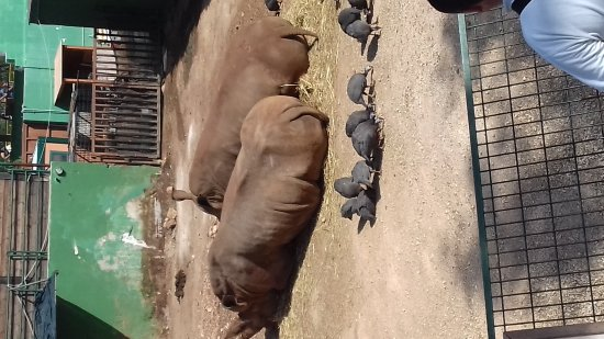 Zoo Safari: 20170917_104459_large.jpg