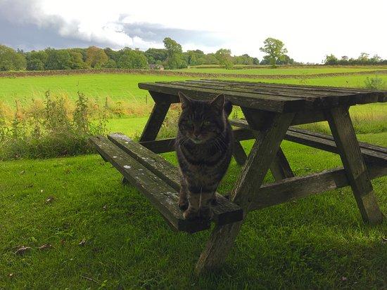 McMurdoston House: Tabs, one of the cats, enjoying the garden!