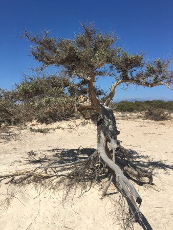 Chrissi Island : Nature!