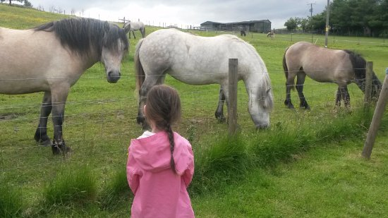 Aberfeldy, UK: Our children loved seeing all the animals,