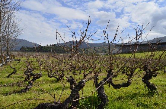 Santa Cruz, Chile: Vinícola Montes
