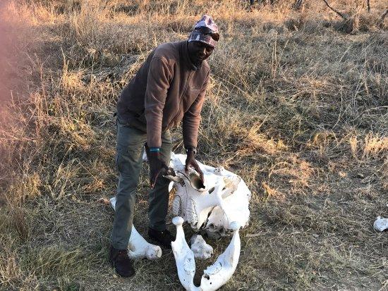 Hwange National Park, زيمبابوي: photo2.jpg
