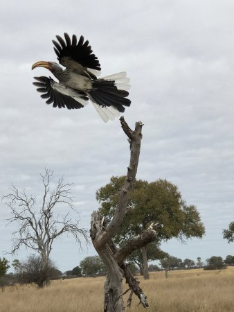 Hwange National Park, زيمبابوي: photo6.jpg