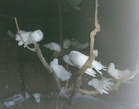 Lozzo Atestino, Italia: Gabbia per uccelli nel parco del castello