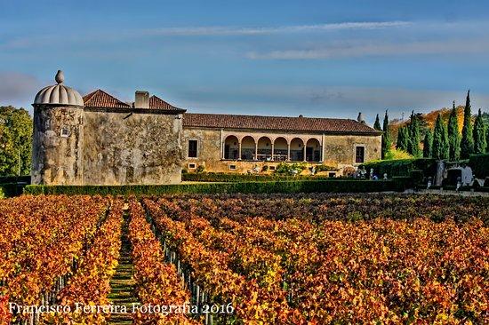 Vila Nogueira de Azeitao, Portugal: vinha