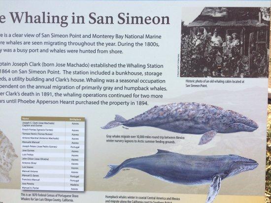 William Randolph Hearst Memorial Beach : Whaling History