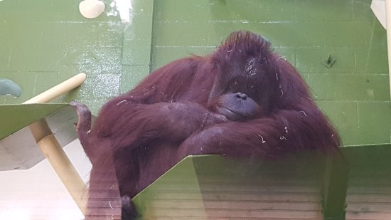 Kansas City Zoo: 20170916_103906_large.jpg