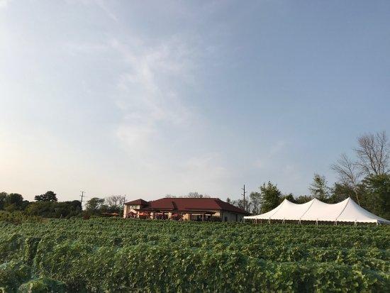 Trempealeau, WI: ELMARO Vineyard