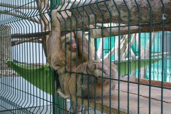 Sloth Sanctuary of Costa Rica: photo0.jpg
