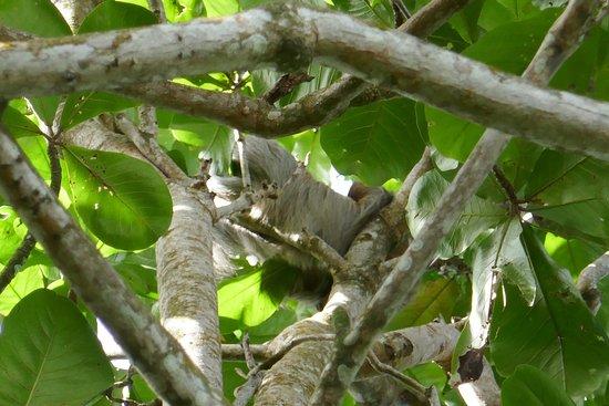 Cahuita, Costa Rica: photo2.jpg