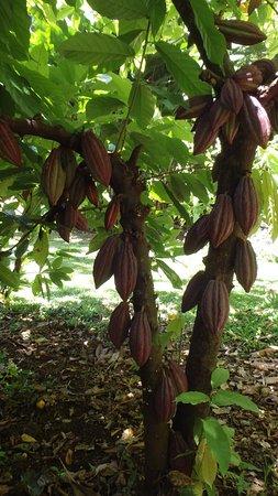 Kauai Botanical Gardens Tours