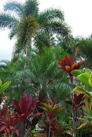 Wahiawa, HI: In the gardens