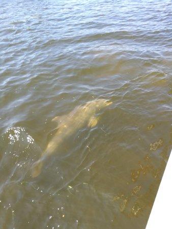 Bradenton Beach, FL: IMG_20170917_113250_large.jpg