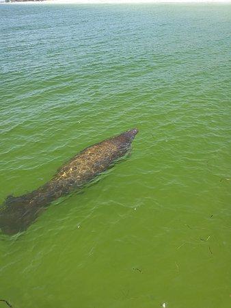 Bradenton Beach, FL: IMG_20170917_121053_large.jpg