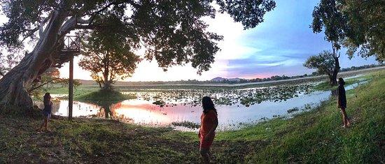 Cinnamon Lodge Habarana: Panorama of the lake