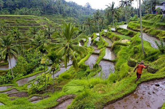 Private Tour: Ubud Highlights