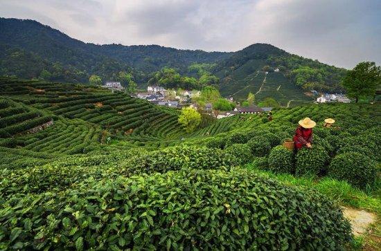 Kleiner Gruppen-Tee-Sammeln...
