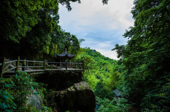 Small Group Hiking Day Tour on Mount Mogan from Hangzhou