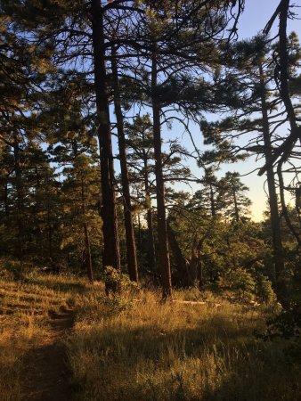 Mount Laguna, CA: Sunset walk late summer