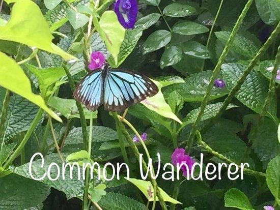 Butterfly park - Ovalekar Wadi: photo8.jpg