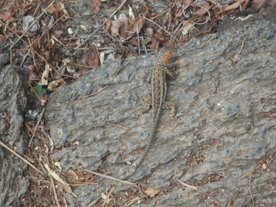The Wall of Tears: lava lizard