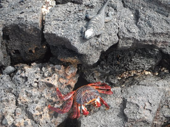 The Wall of Tears: Sally Lightfoot crab