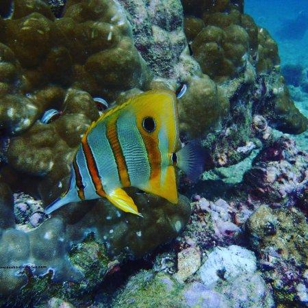 Chalong, Thailand: Scuba Diving in Phuket