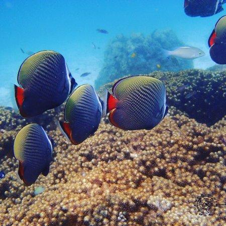 Chalong, Thailand: www.scuba-diving-fun.com