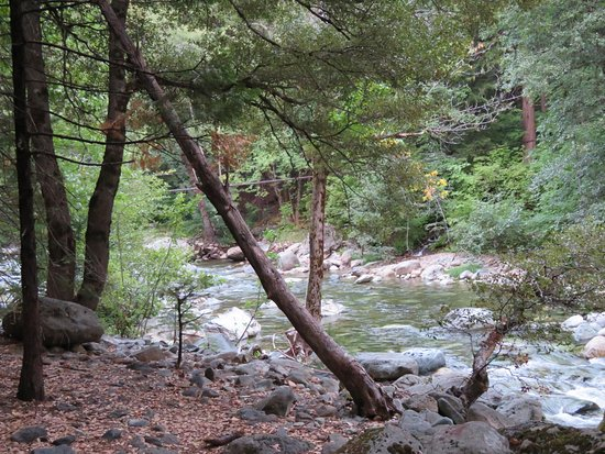 Sierra City, CA: Stream