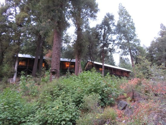 Herrington's Sierra Pines Resort: View from the stream up to the rooms