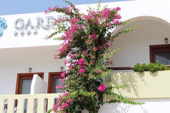 Hotel Alianthos Garden : viele Blumen