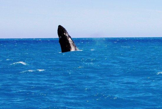 Hervey Bay, Australia: A small sample