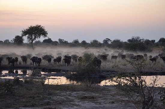 North-West District, Botswana: Stunning sunsets and hundreds of buffalo