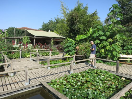Giroussens, France: Bridges over lotus