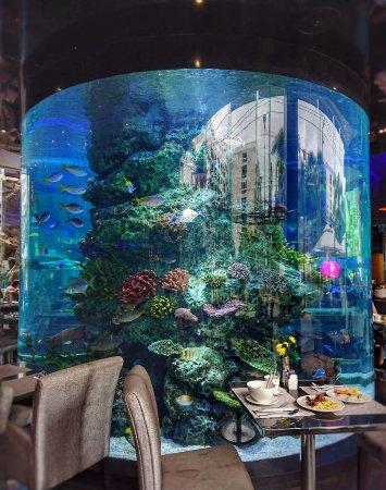 the restaurant picture of centara azure hotel pattaya pattaya rh tripadvisor co nz
