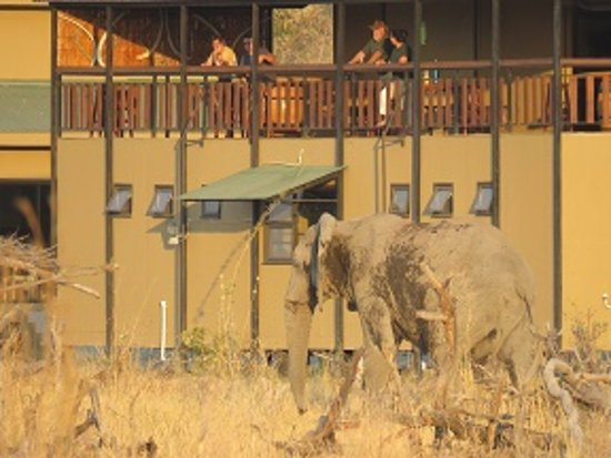 North-West District, Botswana: Top deck at the main lodge over looking spectacular wildlife sitings